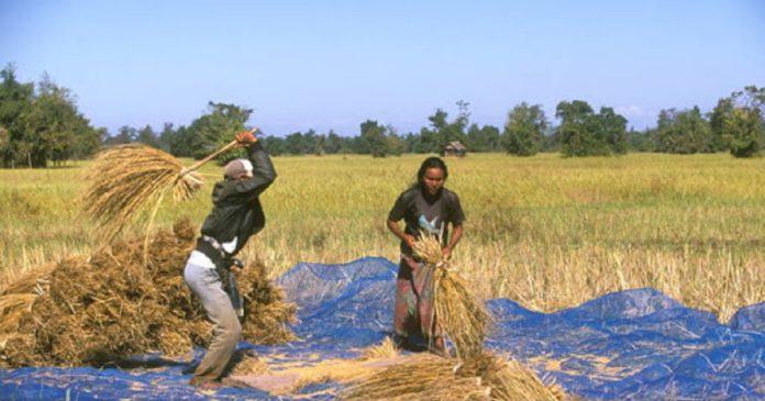 l'agriculture après covid 19