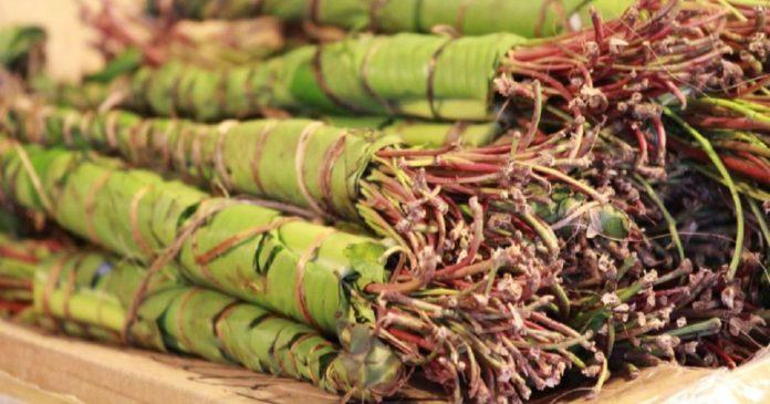 Le commerce du khat : facteur d'une nouvelle brouille entre la Somalie et le Kenya